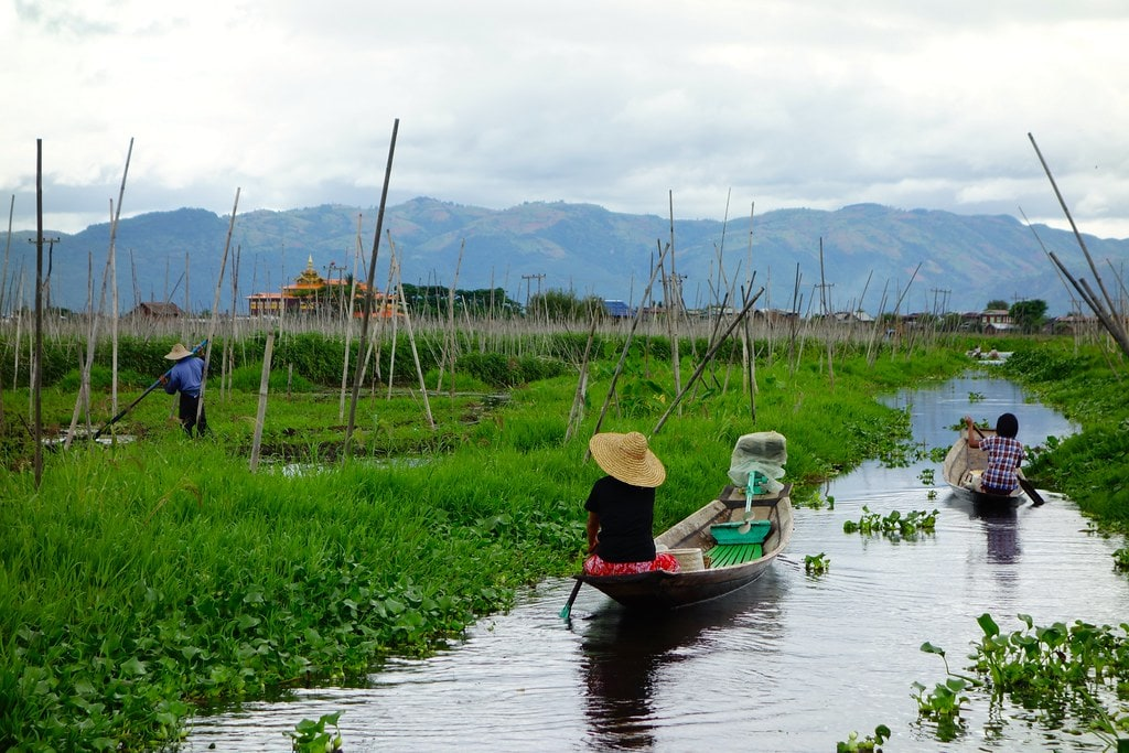 Boats and floating gardens Inle Lake