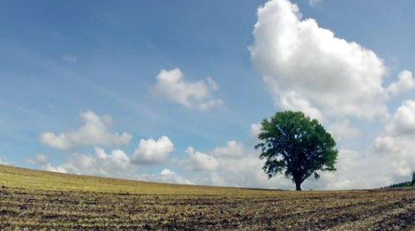 excede-par-le-comportement-des-touristes-il-abat-son-arbre-devenu-celebre-20-minutes-httpst-cobhcgqusce1-httpst-co0fcirgdslu