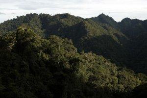 bosque_selva_amazonia_tm_1