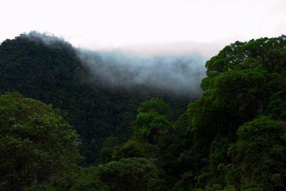 bosque_tm