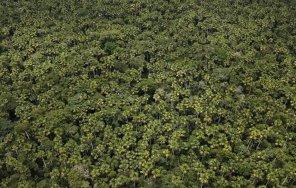En las zonas inundables, los bosques de aguajales crecen a su antojo y sirven de alimento a la fauna local, como es el caso de las distintas especies de monos que se refugian en este inhóspito paraje.