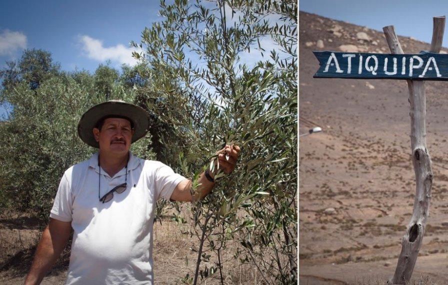 Roberto de La Torre es el actual Presidente de la Comunidad. Ellos producen uno de los aceites de oliva de mejor calidad del Perú, pero la comunidad necesita mayor apoyo para que este producto y otros derivados de la tara por ejemplo, entren al mercado. Si quieres contactarte con ellos llama a Julieta al 999376396 o a Roberto al 993623013.
