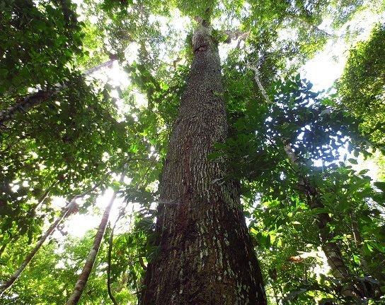 bosque benjamin_sernanp