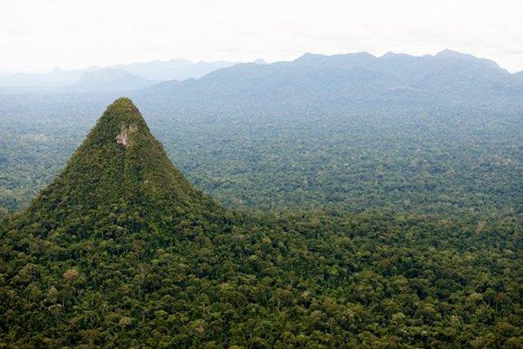 serfor_bosque_sierra_divisor_actualidad_ambiental_spda_serfor