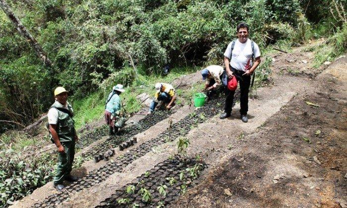 reforestación_andina