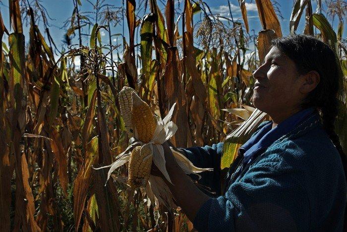 Agricultora maíz_transgénicos. Foto: Thomas Müller - SPDA