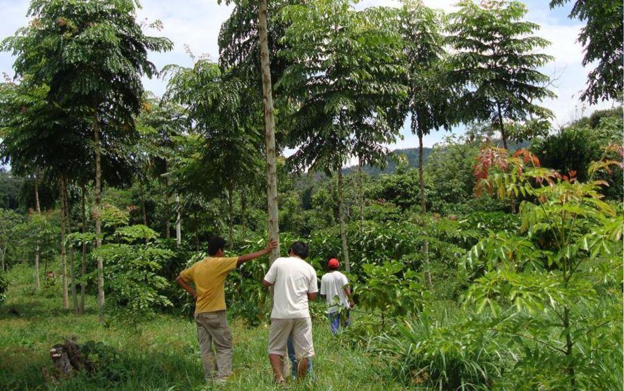 reforestación - Agencia Andina