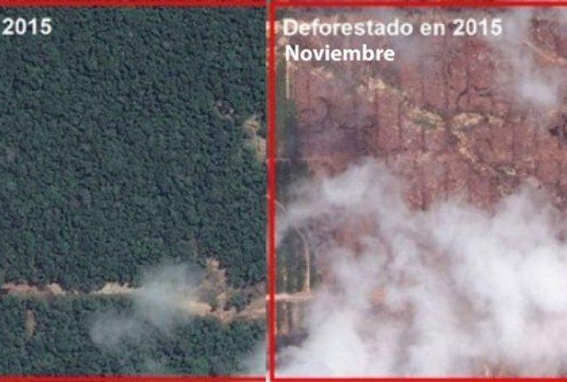 deforestacion en tamshiyacu - maap