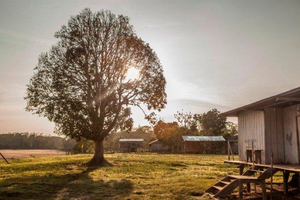 Atardecer en la comunidad Tres Esquinas, distrito de Putumayo. Esta poma rosa, árbol central del pueblo, está situada al lado de la cancha de fulbito de la comunidad.