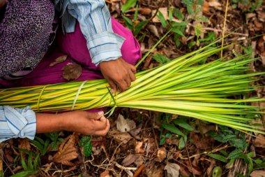 Rosa Pacaya amarra las fibras del cogollo de la chambira. Luego de un proceso de teñido y secado, estarán listas para elaborar productos como paneras y juguetes, que serán ofrecidos en venta a los turistas.