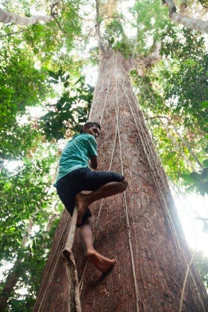 El Meshi es el nombre del árbol más grande que hay en el Bosque de los Niños (BONI). Este bosque se sitúa en un área cedida por los adultos en beneficio de los niños, niñas y adolescentes de la comunidad. Ellos, lo cuidan, lo gestionan y lo disfrutan.