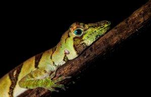Por su gran biodiversidad, los bosques del Yaguas ofrecen gran potencial para la observación de especies de flora y fauna. Foto: Frankfurt Zoological Society