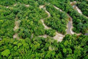 La protección de Yaguas permitirá contribuir a enfrentar el cambio climático. Foto: Álvaro del Campo – Field Museum