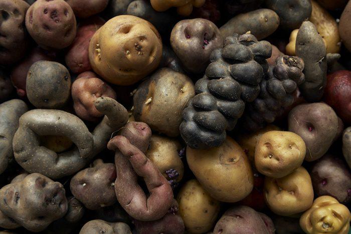 Einheimische Kartoffel aus dem Bestand des International Potato Center in Lima, Peru