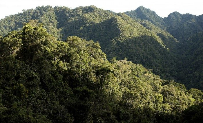 800_bosques_actualidad_ambiental_osinfor-700x425