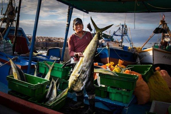 Puerto de Morrosama, en Ilo. Una embarcación recien llegada trae una gran cantidad de perico. El puerto de Ilo, además de ser el más limpio del país, es también uno de los que tiene pesca más abundante.