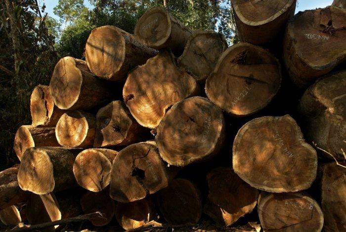 exportacion_madera_eeuu_actualidad_ambiental_spda