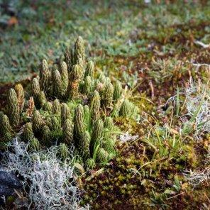 Bosques de Polylepis de Quiaca Ubicado en la provincia de Sandia, en el Sitio Prioritario Bosques de Polylepis de Quiaca, se encuentran bosques de queñua, puma, oso andino, gato andino, cóndor. También hay presencia de apachetas y lugares de peregrinación.