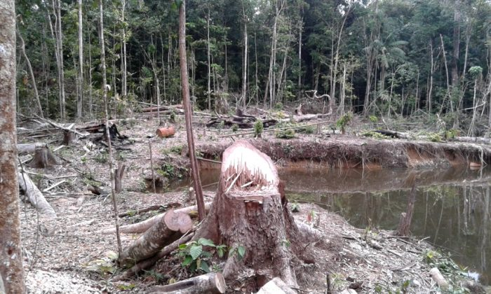 actualidad_ambiental_reserva_tambopata_1