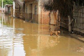 Las mascotas también la pasaron mal. Algunos caminaban desorientados ante la inundación.