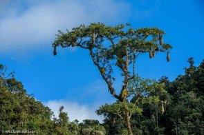 Estudios preliminares han identificado 587 especies de flora, de las cuales no menos de 7 son nuevas para la ciencia. (Michell León / APECO)