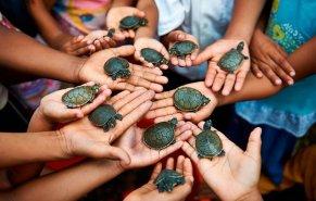 En El Dorado y en otras zonas de la reserva también se cría a la taricaya para repoblar a este especie y para consumo de las comunidades. Foto: Thomas Müller / SPDA