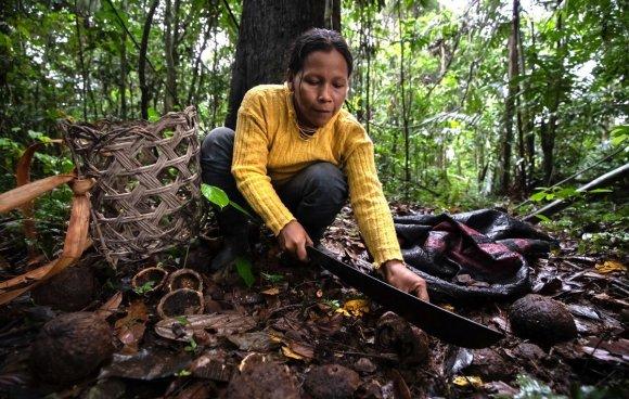 En Boca Pariamanu, la principal actividad es la recolección de castaña. Este fruto del bosque es recolectado desde enero a marzo y es el producto estrella de la zona. La venta de castaña es fija, no hay pierde. La demanda ha crecido con los años. Foto: Diego Pérez / SPDA