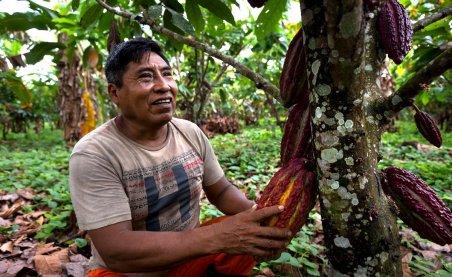Otra actividad que realizan -y están fortaleciendo- es la agricultura sostenible. Algunos habitantes de la comunidad están apostando por la siembra y cosecha de cacao, plátano, papaya, entre otros. La idea es tener productos orgánicos y crear una marca libre de químicos.