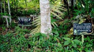 Rolín Pacaya, presidente de dicha comunidad, cuenta que al lugar llegan sobre todo investigadores atraídos por la flora y fauna, especialmente por las plantas medicinales. Jaime Tranca / SPDA