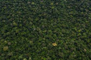 13. En lo que resta del trayecto hasta Jeberos, la vía cruzaría el bosque de producción permanente - Zona 4F.