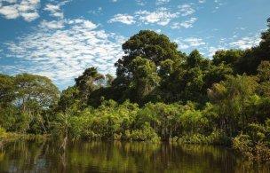Otra característica de esta zona de la Amazonía, es la presencia de Humedales, sistemas frágiles capaces de almacenar gran cantidad de carbono, por lo que preservarlos es una manera de hacer frente al calentamiento global y el cambio climático. Foto: SPDA/Spectabilis