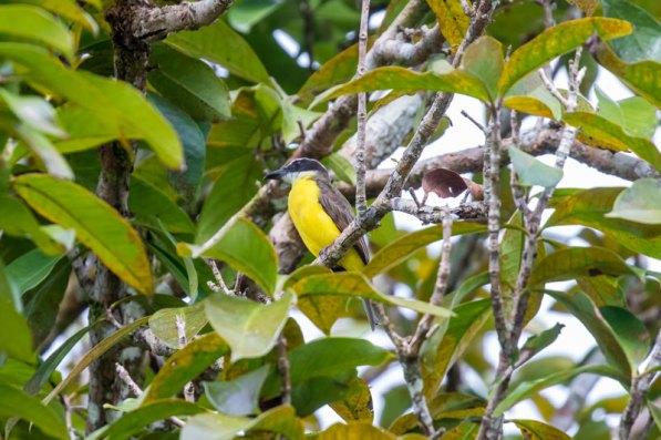 Por ello, la observación de aves es una actividad que atrae a turistas, aficionados y expertos. Foto: Spectabilis/SPDA