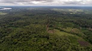 Vista aérea de los bosques que atravesaría la vía Jenaro Herrera - Requena.