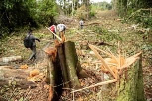 Tramo del avance, donde se puede ver la tala de árboles y deforestación del recorrido.