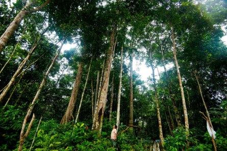 bosque-1-yaguas-sernanp