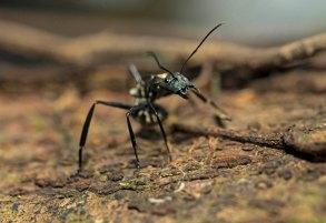 insecto-yaguas-sernanp