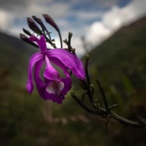 Orquídea. Foto: Diego Pérez | SPDA