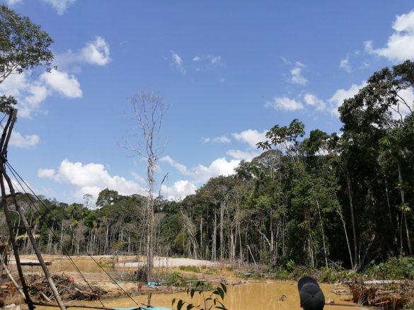 Las áreas deforestadas corresponden a bosques de castaña ubicados en la margen izquierda del río Pariamanu, algunas son cercanas a la comunidad nativa de Boca Pariamanu. Foto: FEMA Madre de Dios.