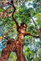 Esculturas en madera muerta de seres mitológicos. Foto: Amazon Forver Biopark