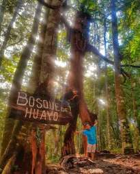 El Bosque de Huayo. Foto: Amazon Forver Biopark