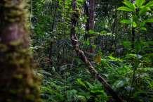 Foto: Diego Pérez / WWF