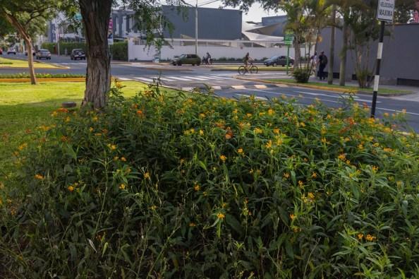 flores - mariposa monarca - diego spda