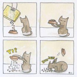 gato come