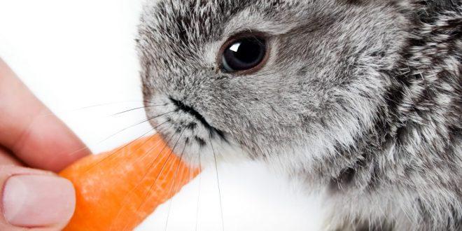 Cuidados de tu conejo