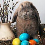Enfermedades más comunes de los conejos
