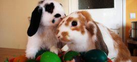 Enfermedades más comunes de los conejos II