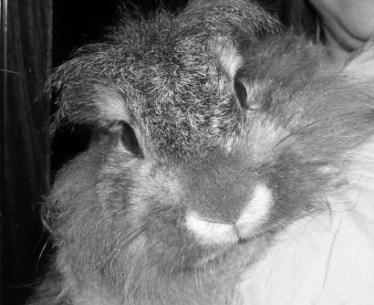 Mi conejo