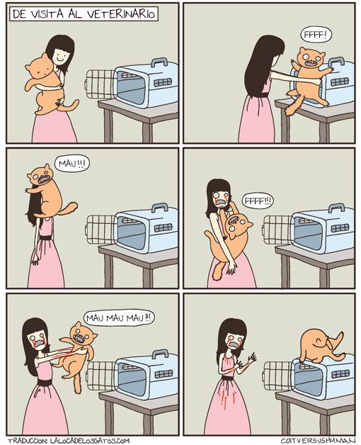 acostumbra a tu gato a su transportin
