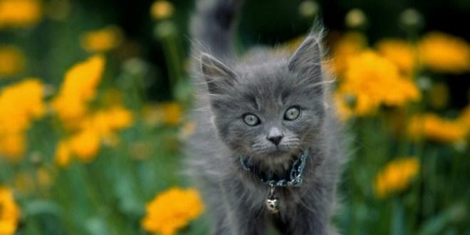 Por qué no debes poner un cascabel a tu gato