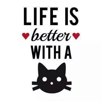 cuida a tu gato